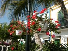 Urlaub Kanarische Inseln