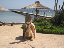 Afrika Reiseangebote